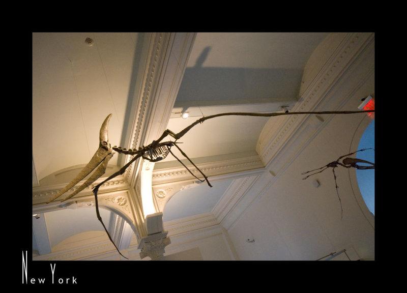 Museum of Natural History_D2B3521.jpg