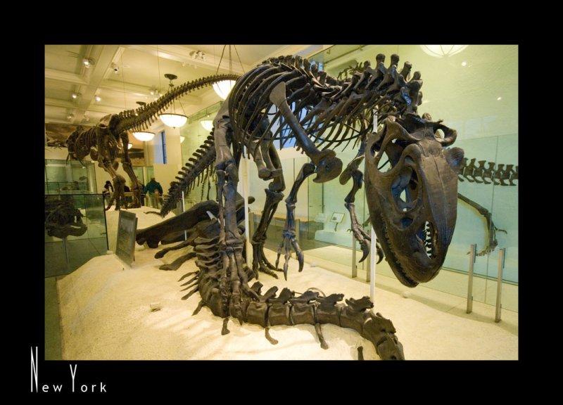 Museum of Natural History_D2B3524.jpg