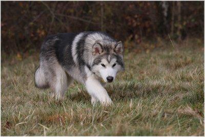 Wolfy Jake.JPG