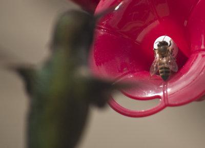 Bee Thief