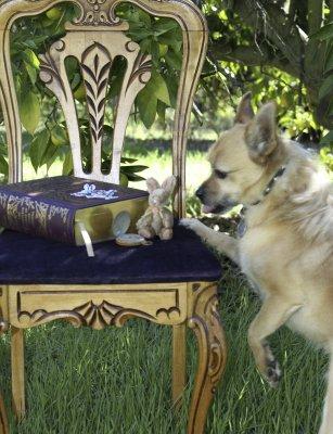 Little Dog Thief
