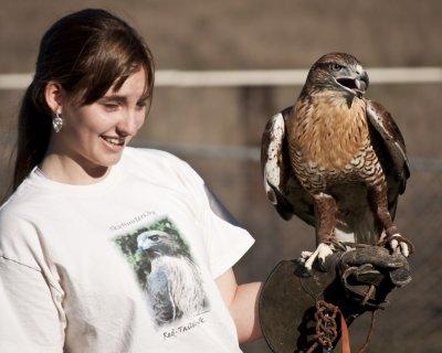 Hawk Watch