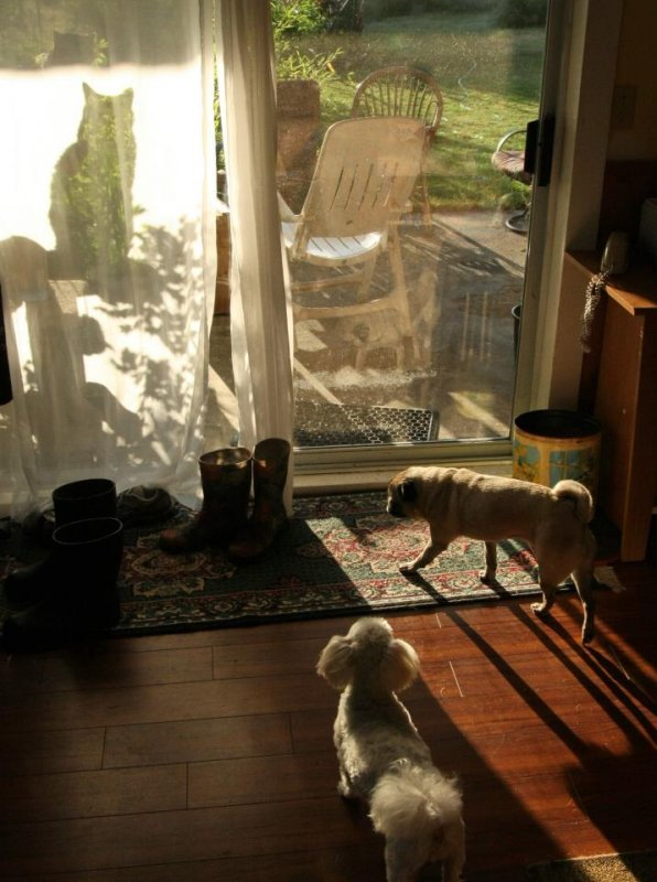 catz and dogz.jpg