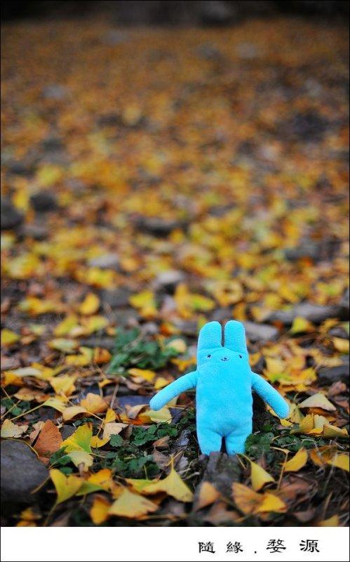 He Loves Autumn §Ú·R²`¬î
