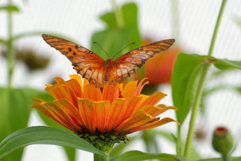 Butterfly Zoo