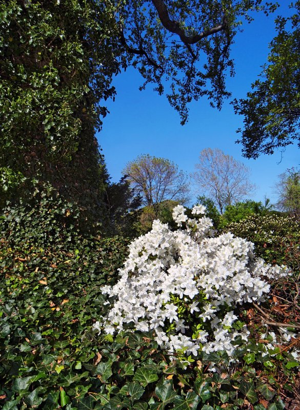 Spring Flowers (DXO conversion)