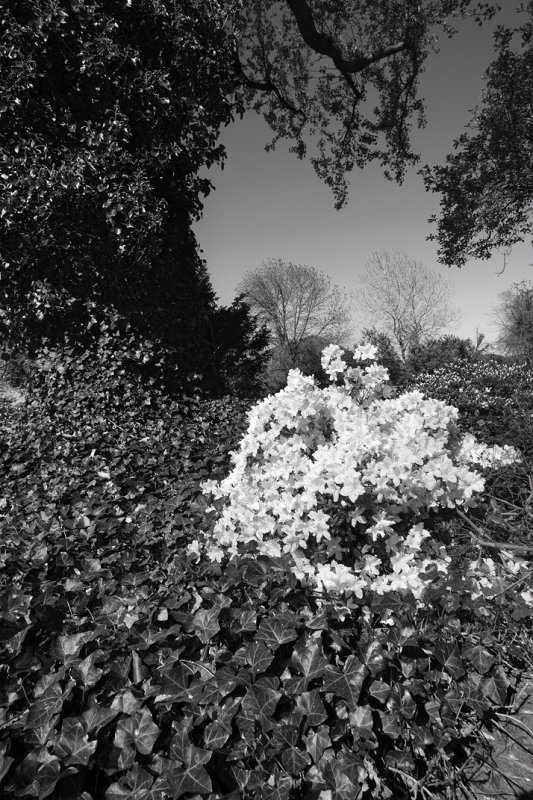 Flowers and Ivy Mono