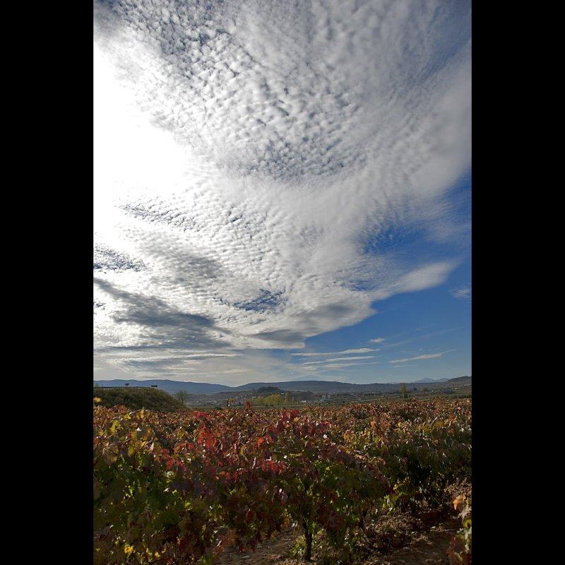 Autumn in La Rioja 12