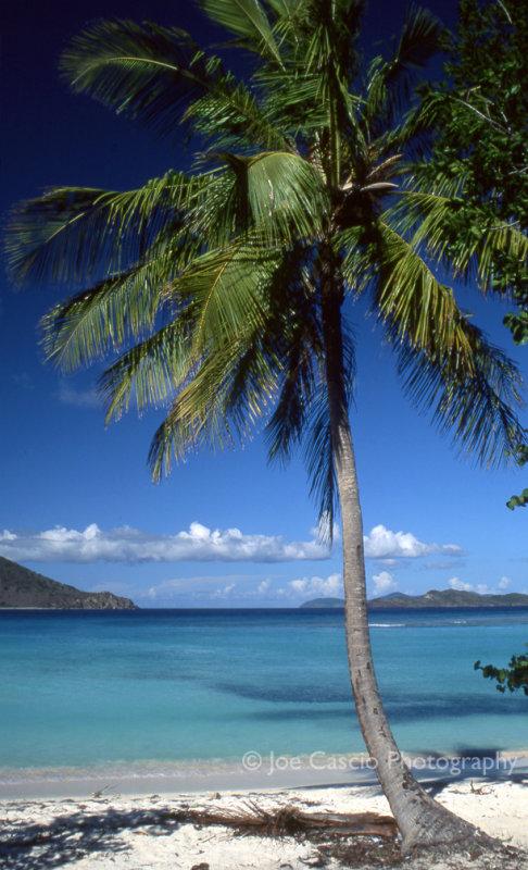 single_palm_tree_01.jpg