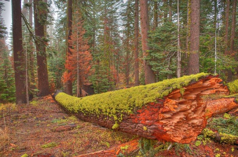 Green Log HDR