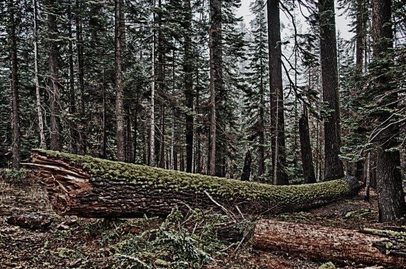 Green Log Bleached