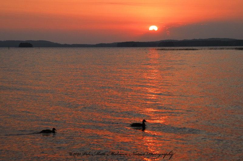The Sunset Ducks