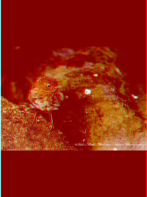 Image3D-20101221210953.png