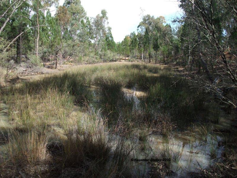 Frog Pond, Coolatai