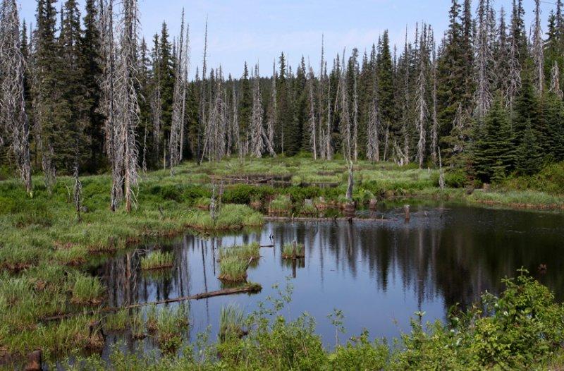 pond in B.C - 2021