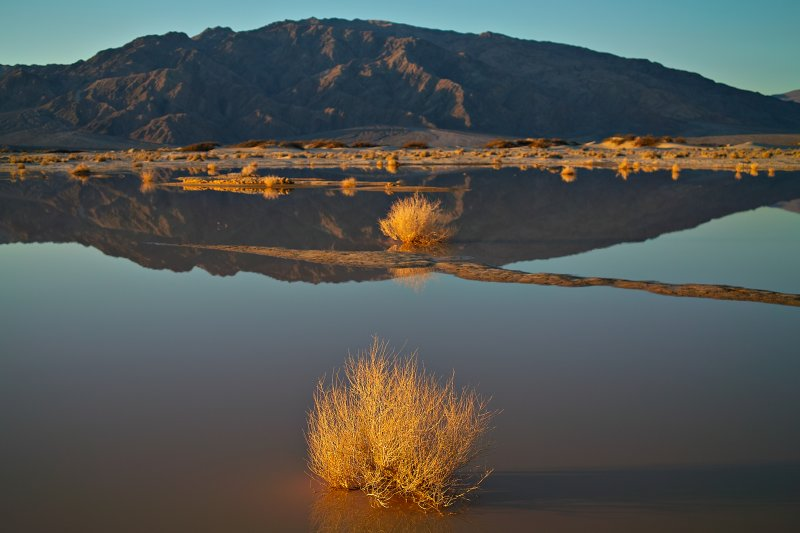 Morning light at the bog
