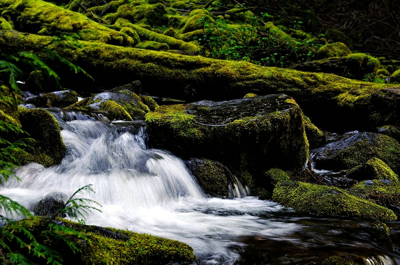 A little piece of the creek at  lower Proxy Falls