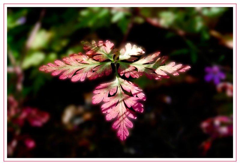 Fading Summer Leaf