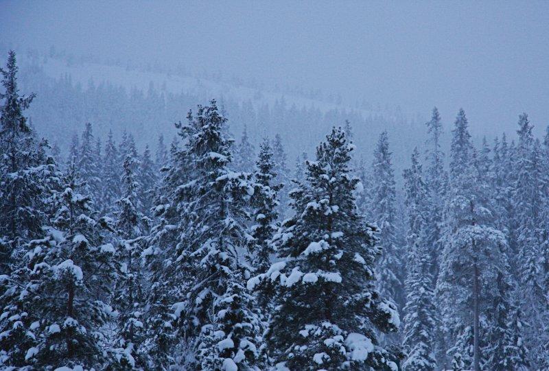 Winter in Sälen