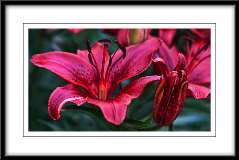 june 18 lily again