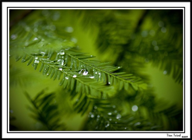 Green Water5
