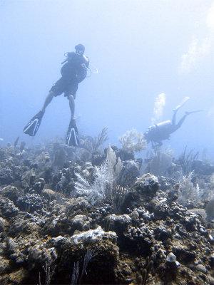Divers at Boneyard