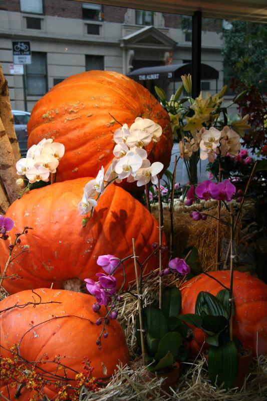 Pumpkins & Orchids - University Place Floral Shop Window