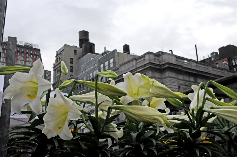 Lilies - Flower Market