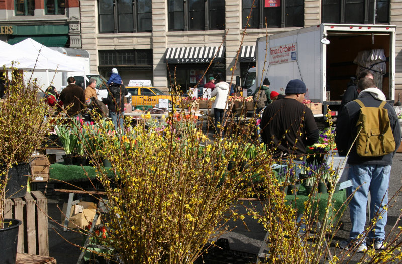 Farmers Market - Forsythia