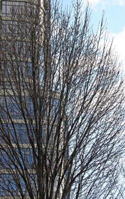 Oak Tree & Condominium
