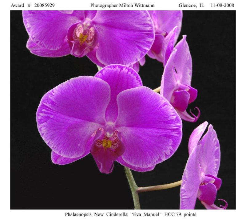 20085929 - Plal. New Cinderalla Eva Manuel HCC/AOS 79 pts.