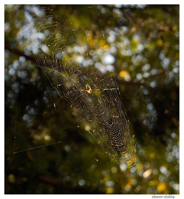 Death Defying Spider Web, My Garden