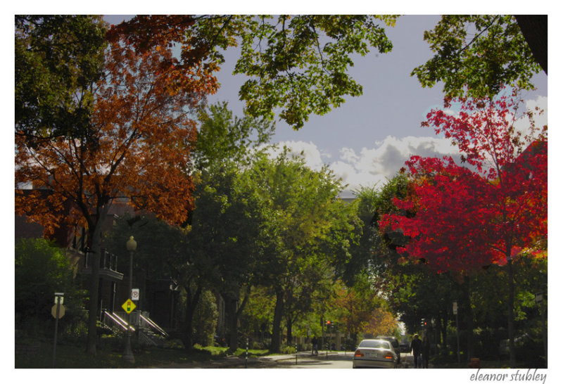 Changing Season, My Street