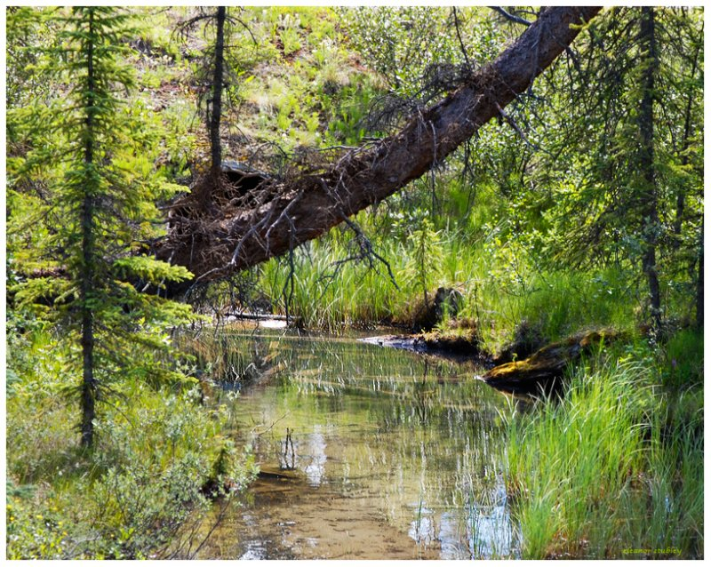 Bow Valley Parkway Creek, Alberta