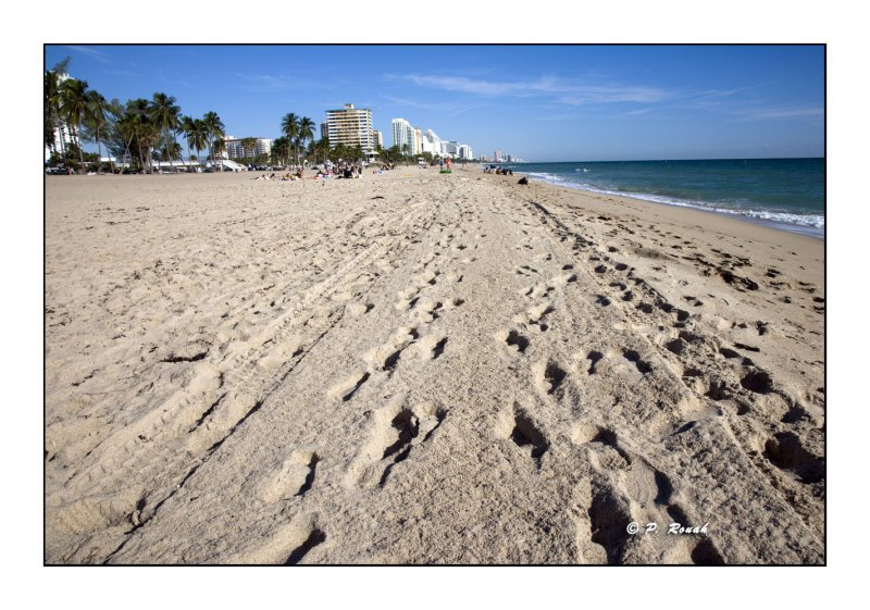 Ft Lauderdale Beach - 3253