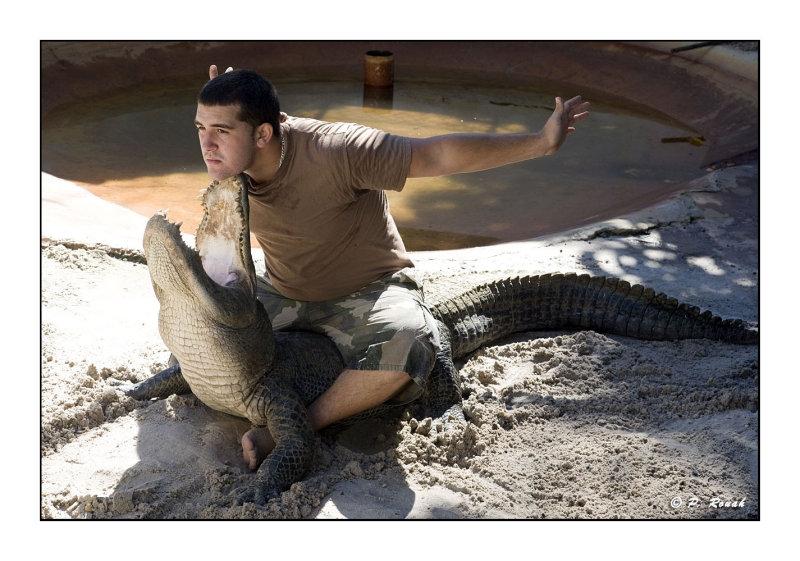 Alligator Wrestling - 3491