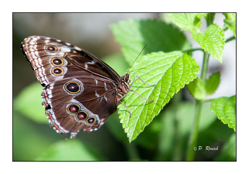 Butterfly - 3727