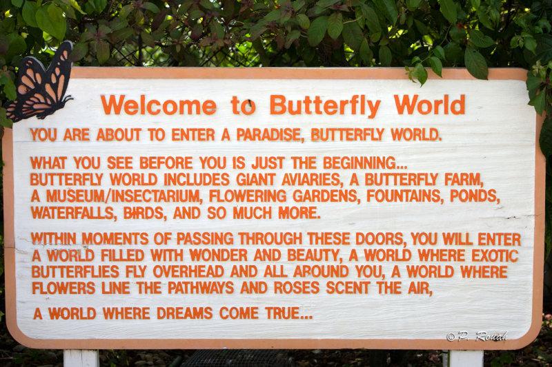 Butterfly World - 3722