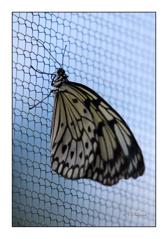 Butterfly - 3753