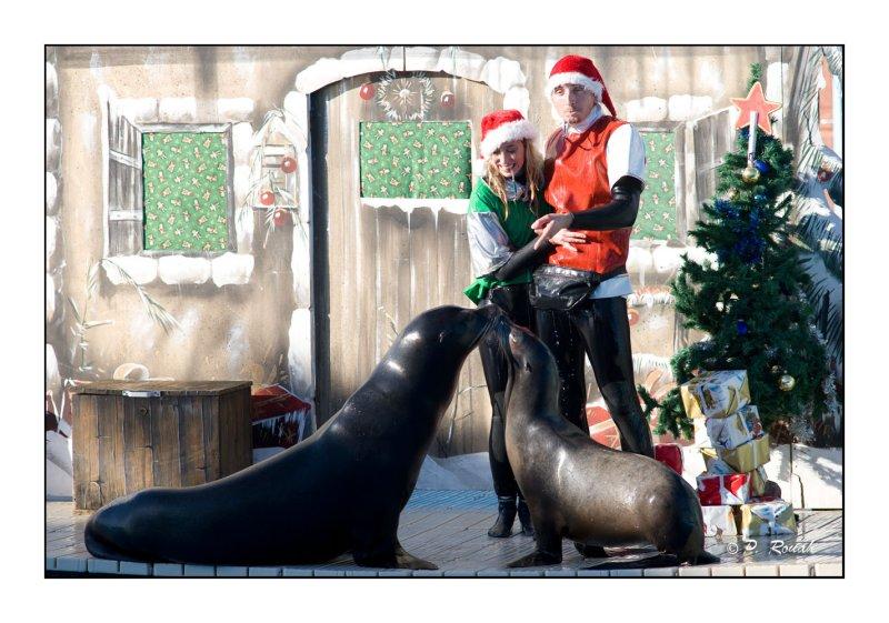 Christmas Kiss - Marineland dAntibes - 4185