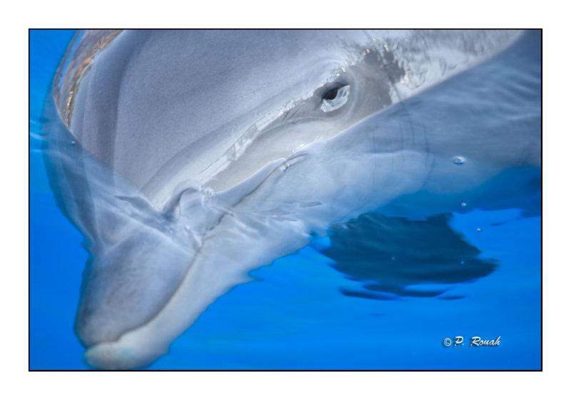 Dolphin - Marineland dAntibes - 4574