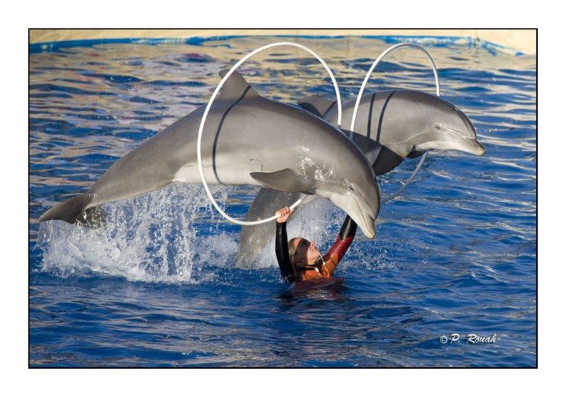 Dolphins - Marineland dAntibes - 4709
