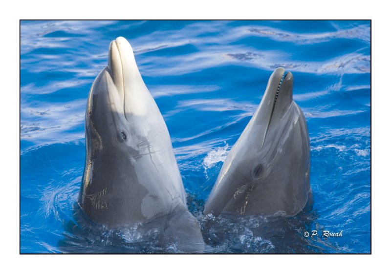 Dolphins - Marineland dAntibes - 4746