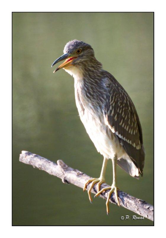 Heron - 1653