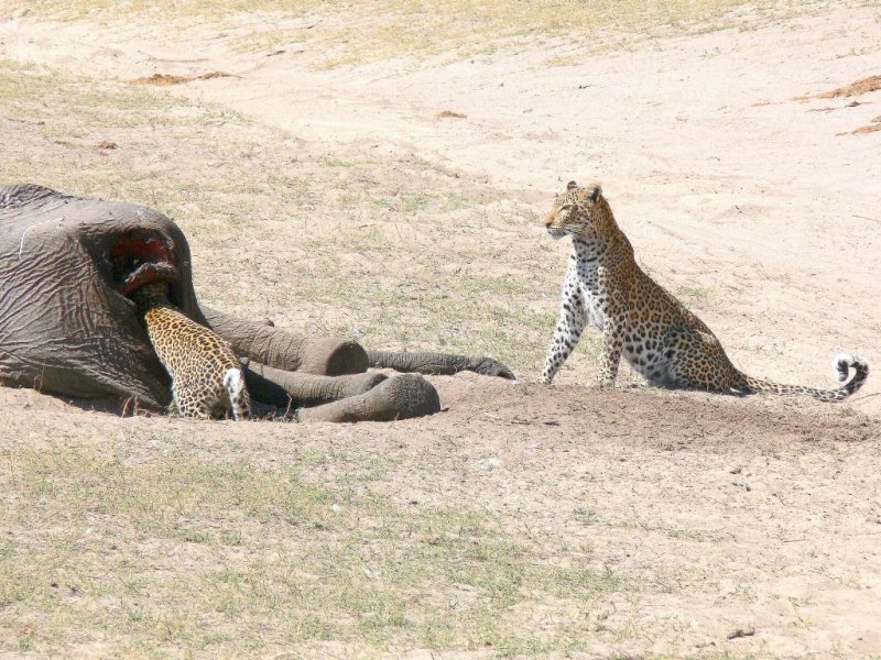 Mother Wondering What in the World Cub is Doing