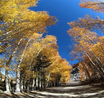 Aspen Cover - Eastern Sierras
