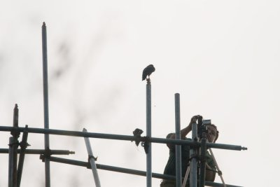 Mystery bird w/ digicam
