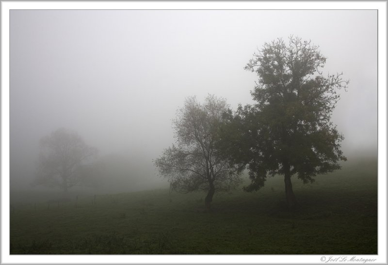 Foggy day (3)