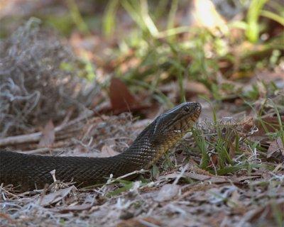 Snake in the Grass.jpg