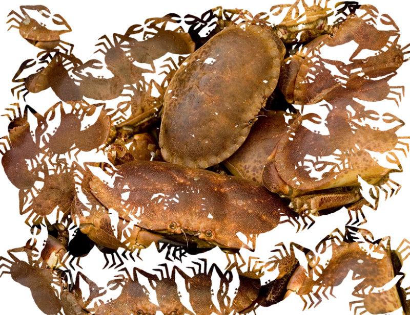 crab jittered.jpg